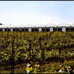 greenhouse and wine field
